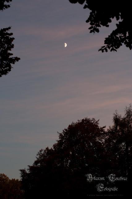 der Abendhimmel mit dem halb Mond