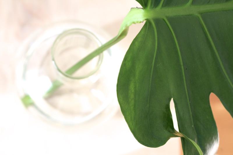lasimaljakko ja vihreä lehti