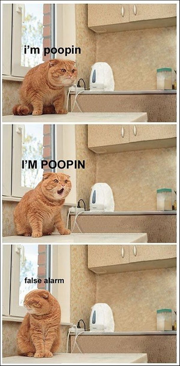 animal pictures with captions, lolcats, i'm poopin false alarm