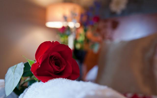 Hermosa Flor Roja - Imagenes de Flores en HD