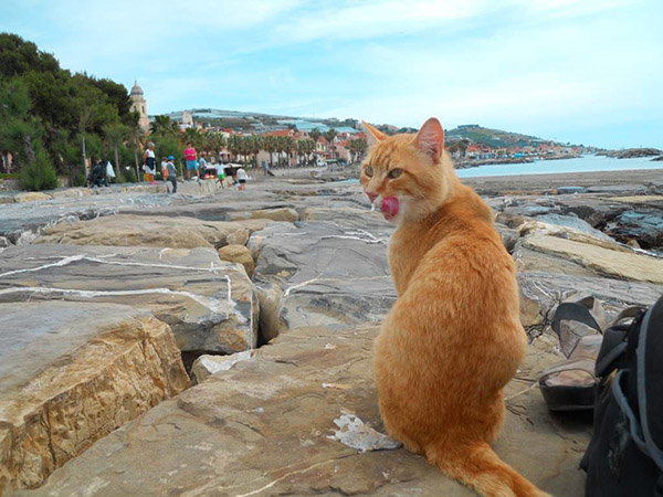 Topic des chats - Page 17 Riva_ligure_italy