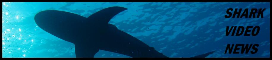Shark Video News