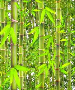 cara-memotong-bambu.jpg