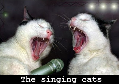 singing cats photo