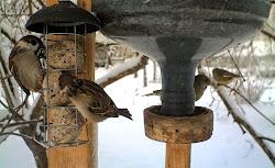 Cámara invernal de pájaros