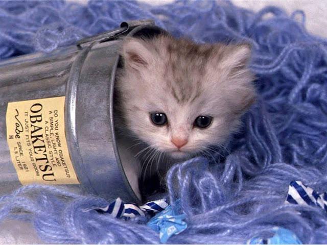 Cute Kitty Wallpaper cats