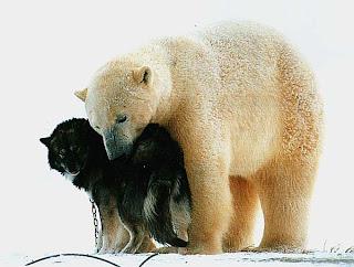 Полярный медведь и собака