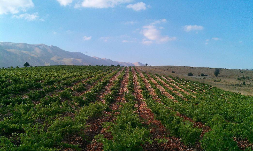 http://2.bp.blogspot.com/-GFCmmVvZ5g4/Ti64fC1NmoI/AAAAAAAABTw/cvW7u2osz24/s1600/vineyard%2Bdeir%2Bel%2Bahmar%2Bfair%2Btrade%2Blebanon%2B1.JPG