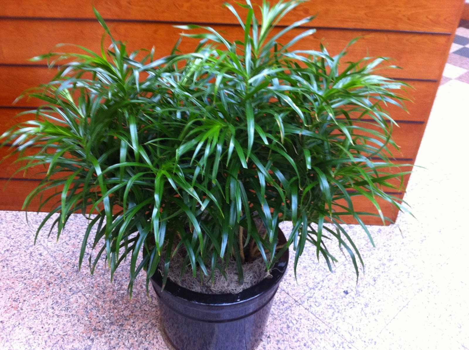 Interior Plant Service And Free Guarantee; Plant Office Maintenance