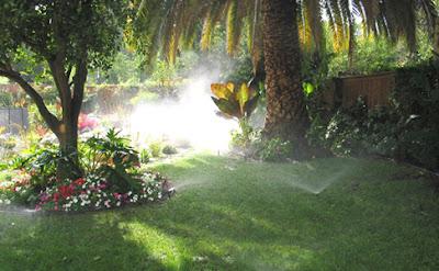 Outdoor Garden Landscape