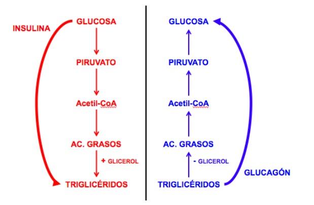 como eliminar naturalmente cristales de acido urico en articulaciones tratamiento de la gota con alopurinol donde comprar medidor acido urico