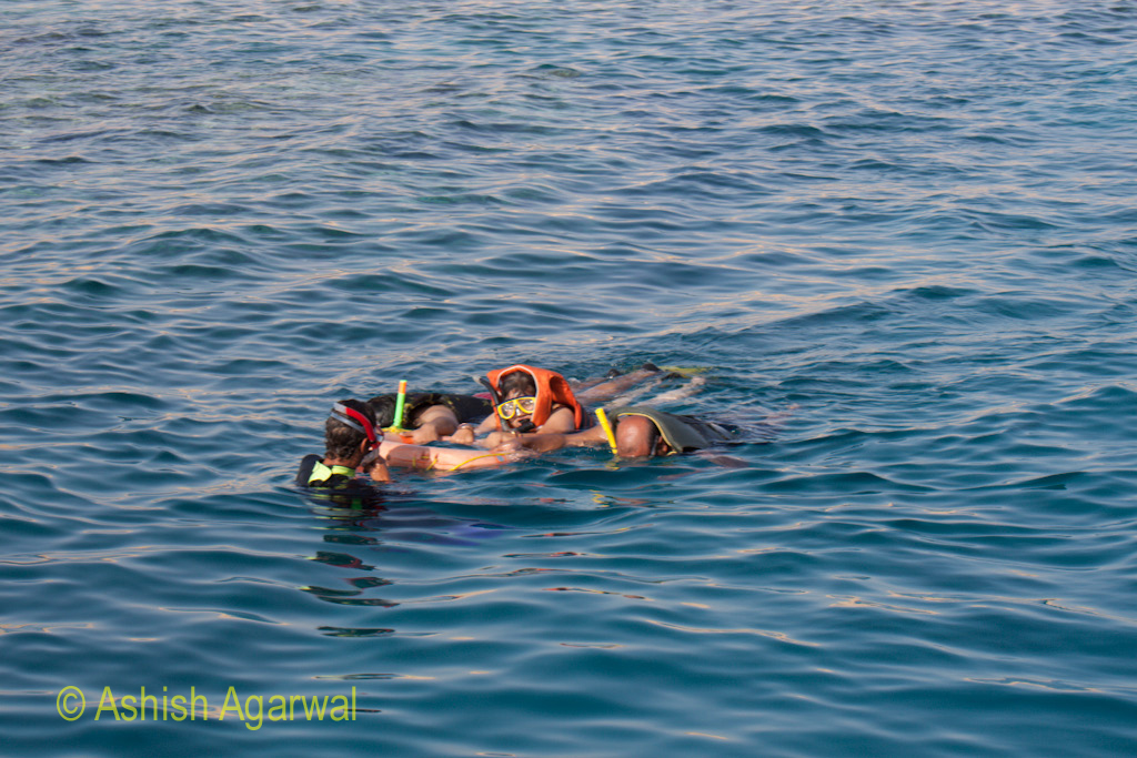Snorkeling tourists clutching a rubber tube in the Ras Muhammed marine park in the Red Sea