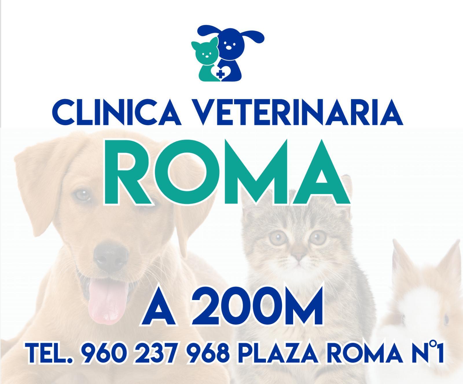 CLÍNICA VETERINARIA ROMA