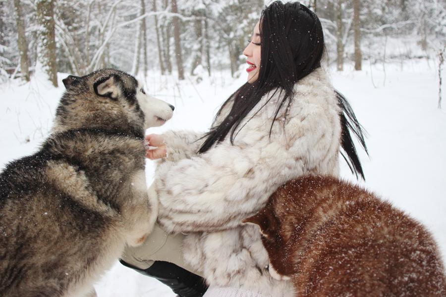 Husky sled Riga Latvia