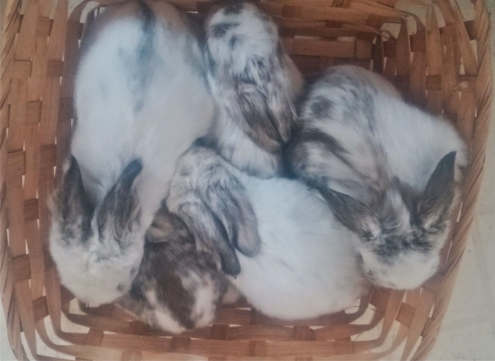 EverAfter Rabbits