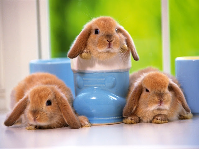Cute Rabbits 5