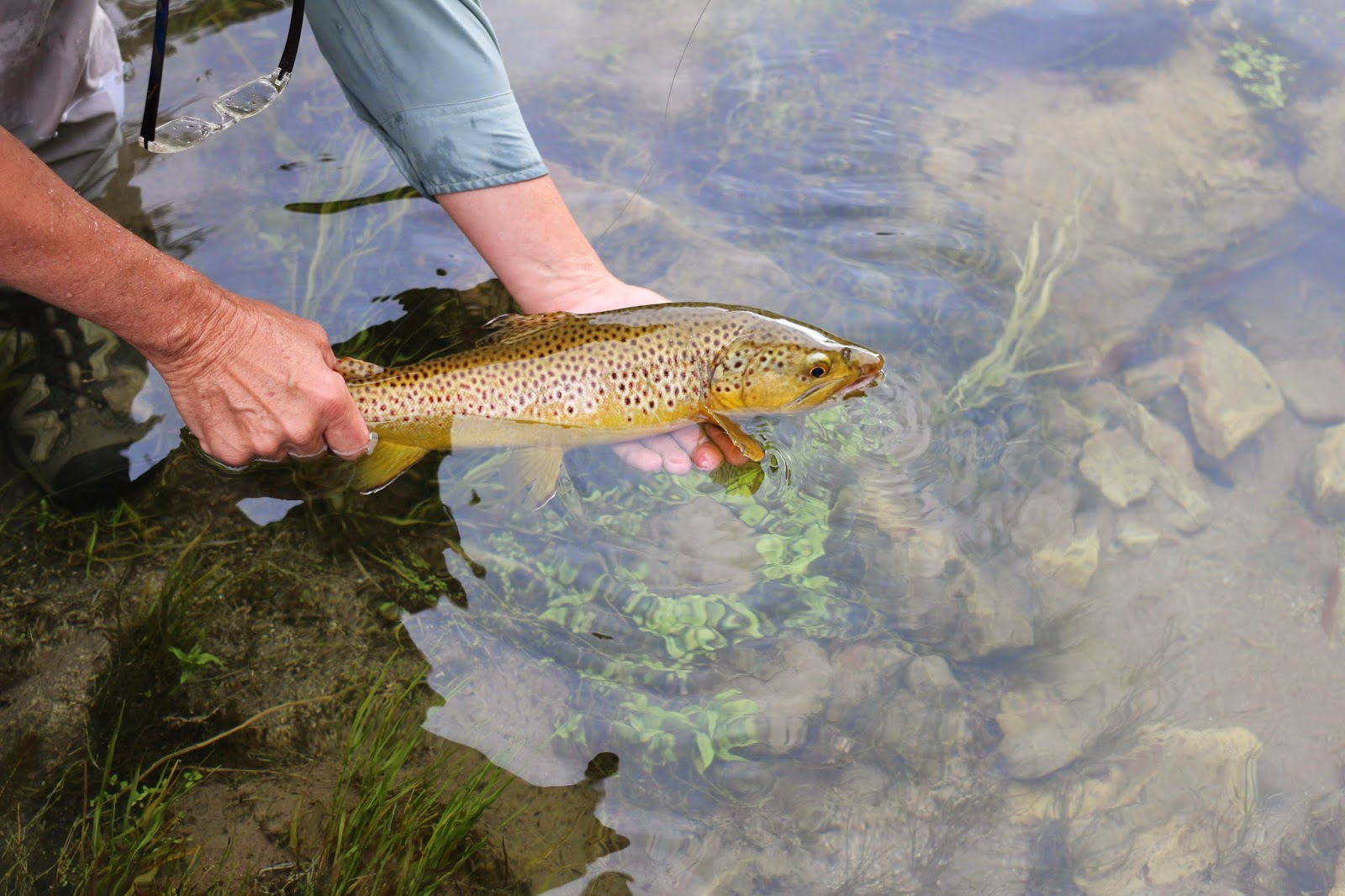 Fly+Fish+the+Green+River+A+section+with+Jay+Scott+Outdoors+during+the+Cicada+Hatch+June+2014+18.JPG