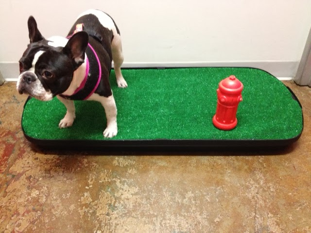 The Best Indoor Dog Potty July 2013