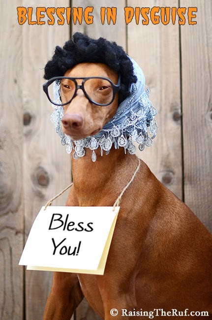 blessing in disguise dog halloween costume