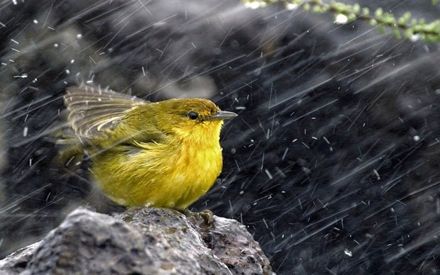 http://www.funmag.org/pictures-mag/animals-and-birds/birds-in-rain/