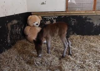 caballito con un oso de peluche