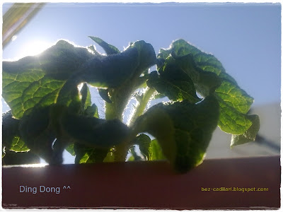 dokgo_jin+dingdong+the_greatest_love