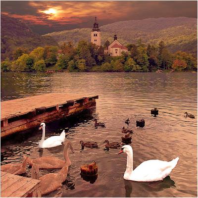 Lago Cisnes Postales