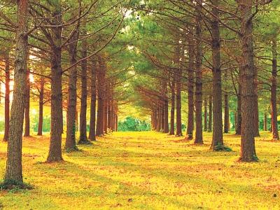 Pokok adalah sebahagian ekosistem utama dan hidup dengan menyerap air, karbon dioksida serta cahaya matahari.