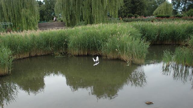 пруд, ставший болотом