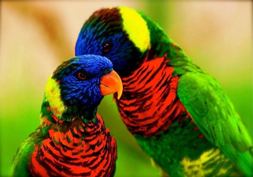 colorful birds beautif...