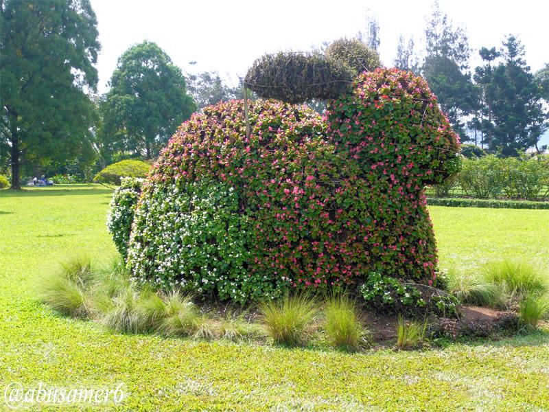 الزهور بونقا) إندونيسيا T03.jpg