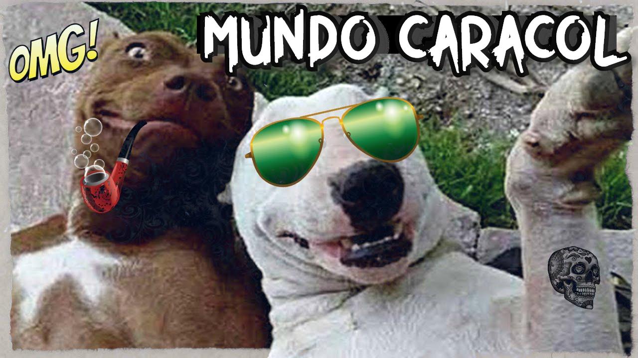 MUNDO CARACOL