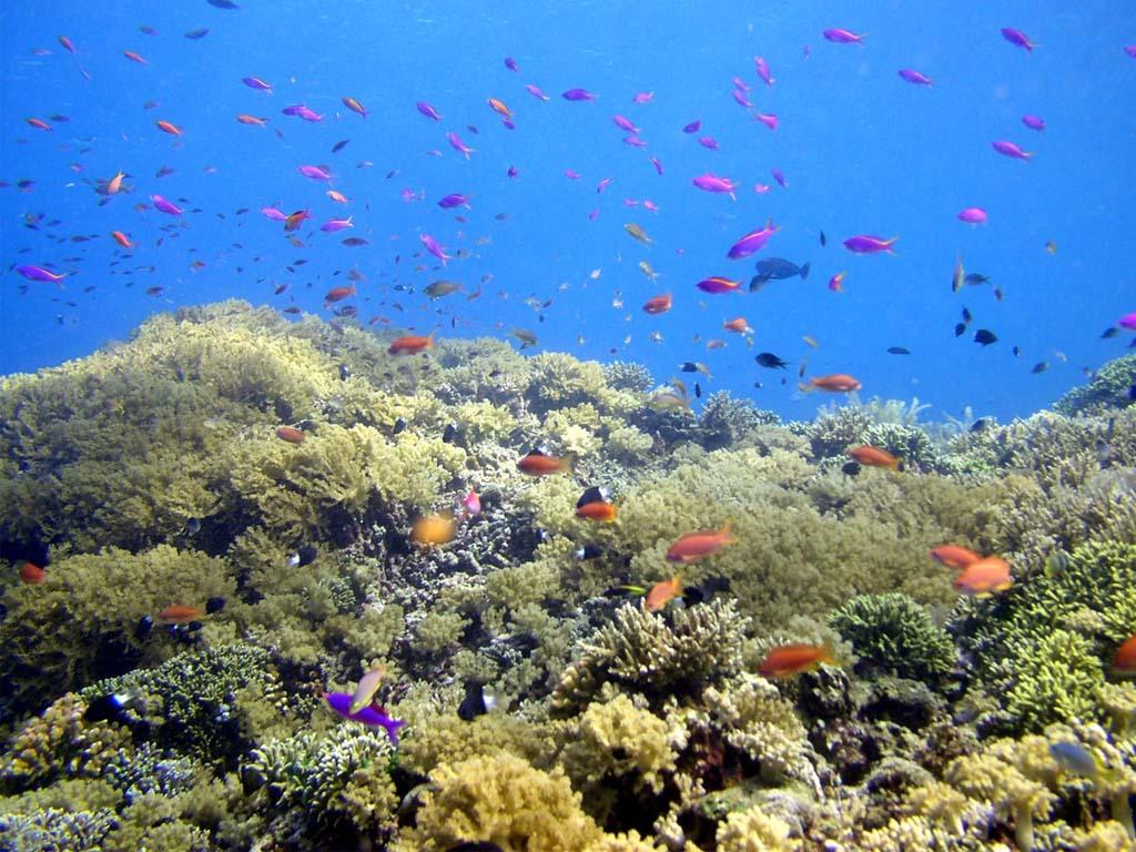 http://2.bp.blogspot.com/-GGr-PBEhgqc/TdOmCdqUkeI/AAAAAAAAARU/_l06_DNUU-4/s1600/view-under-sea-bunaken.jpg