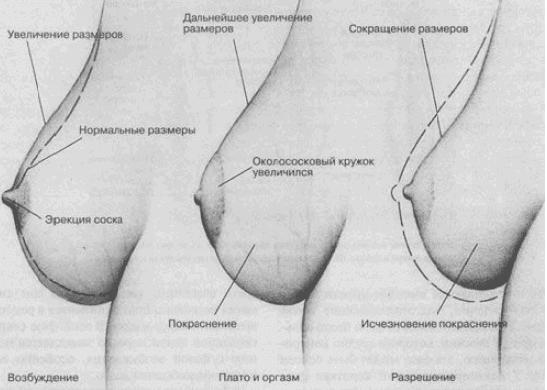 menyaetsya-li-razmer-chlena