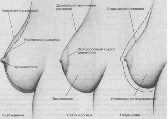 pri-sekse-propadaet-erektsiya