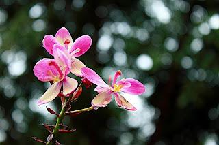 Tips Memotret Bunga Dan Tanaman