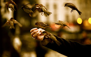 Sparrows Hand Food HD Wallpaper