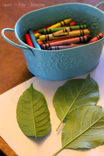Invitation to make leaf rubbings