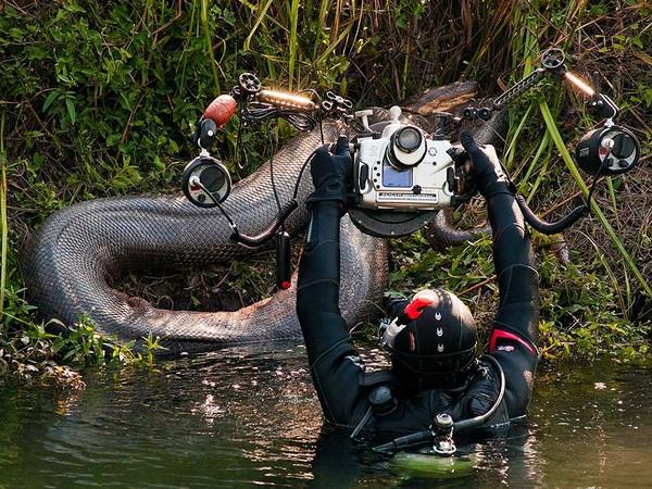 Uma cobra com 7 metros de comprimento é fotografada no MS