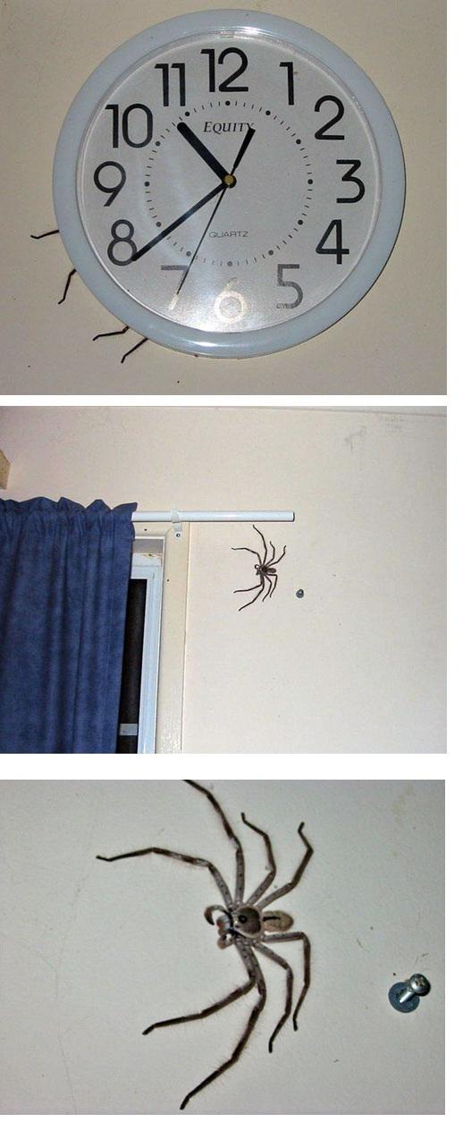 Quando começar a ter pavor de aranhas