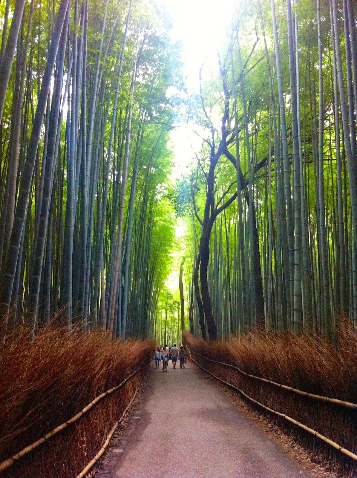Giappone Kyoto foresta di Bambù