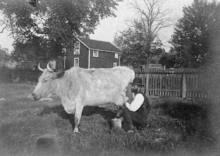 Historic photo of man milking a cow in Pittsburgh