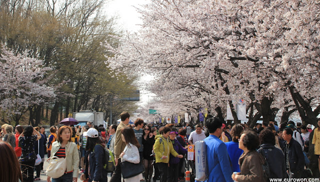 Aspecto de Yeouido en el Festival de Flores Primaverales