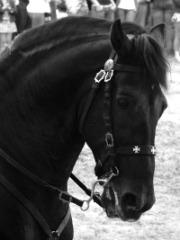 Classe dels cavalls