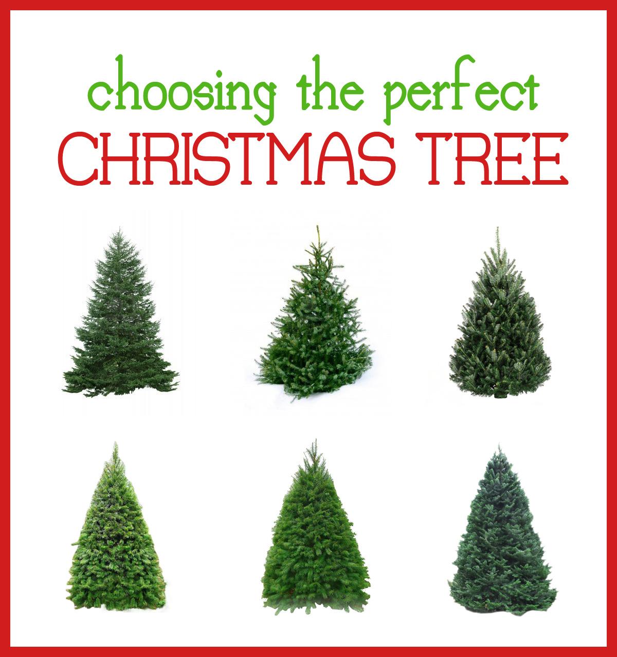 Types Of Christmas Trees Kccbtafb