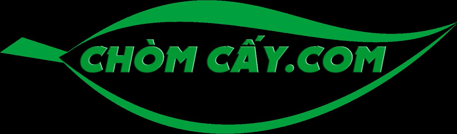 Bột Sắn Dây Ta nguyên chất 100% tại Hà Nội