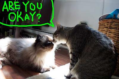 cat-reunion-01