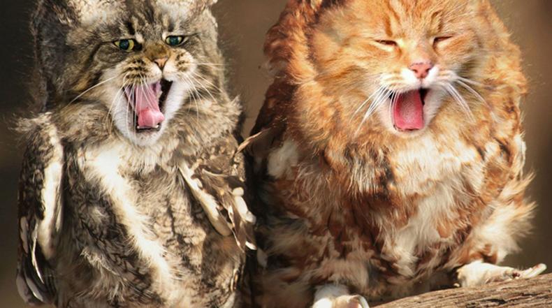 El gato y el búho se combinan para formar el híbrido adorablemente bizarro
