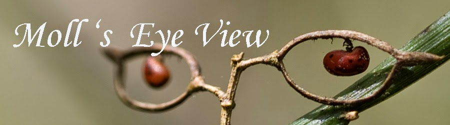 Moll's  Eye View