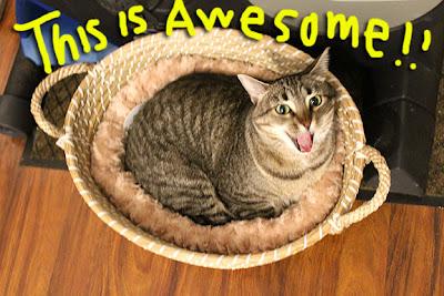 Cat-Bed_DIY_01